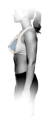 Cooperin ligamentit kannattelevat rintakudosta